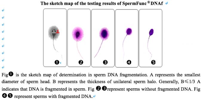 sperm in Multiple dna